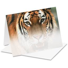 Tiger Eyes Notecards