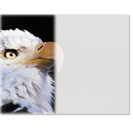 Eagle Photo Casual Certificates