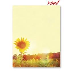 Chromatic Sunflower Border Paper