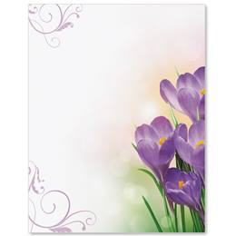 Crocus Morning Border Papers