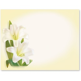 Lily Blooms Postcards