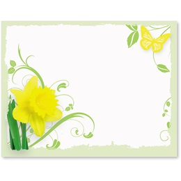 Daffodil Delight Postcards