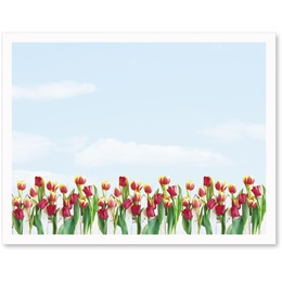 Tulip Garden Postcards